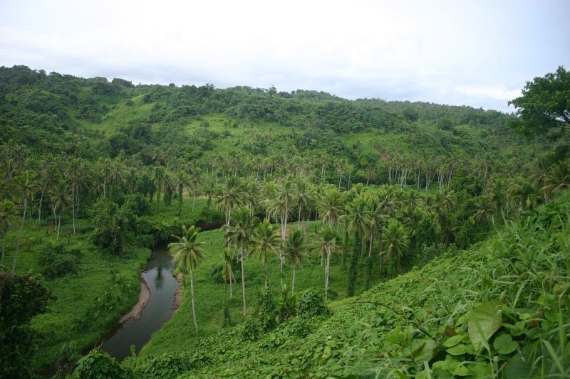 Forest Fiji
