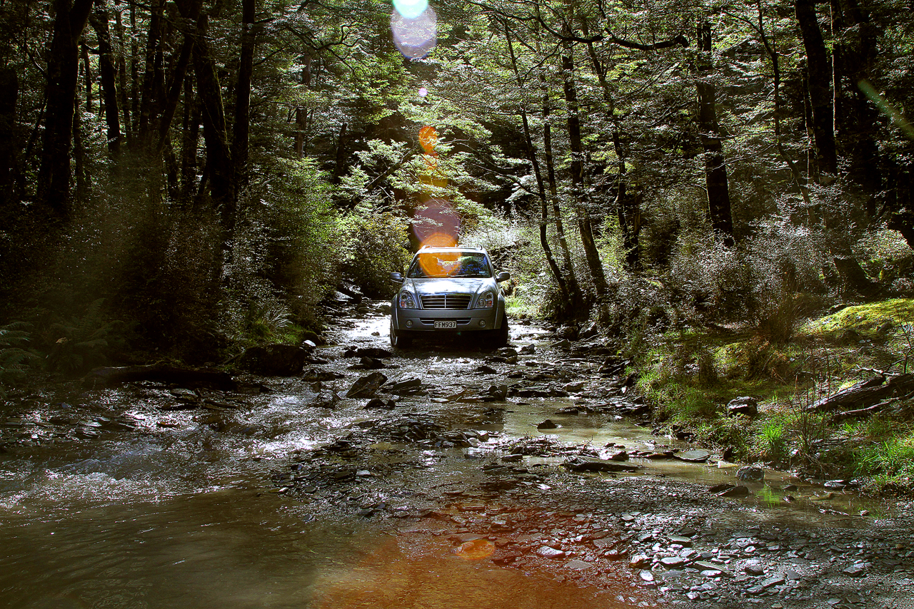 South Island Forest crossing